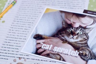 Cat Scratch_d1